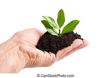 pianta, ecologia, albero, giovane, ambiente, uomo