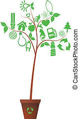 pianta, ecologia