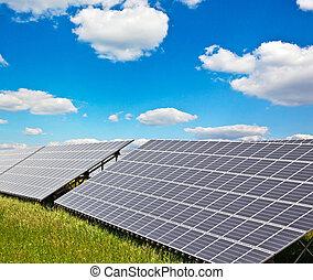 pianta, energia solare