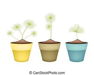 pianta, fiore, ceramica, otri, papiro, cyperus