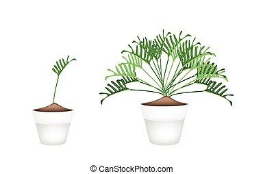 pianta, fiore, philodendron, ceramica, otri, twho
