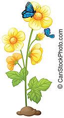 pianta, fiori, giallo, azzurramento