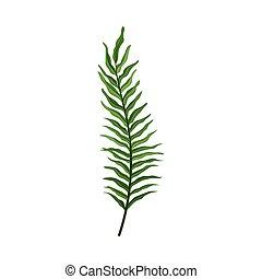 pianta, foglia, felce, decorativo, sfondo bianco, isolato