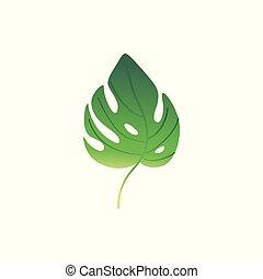 pianta, foglia, felce, vettore, verde, cartone animato, icona