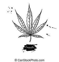 pianta, foglia, illustration., drawing., marijuana, canapa, vettore, canapa, botanico, sketch.