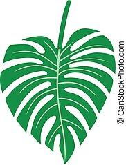 pianta, foglia, -, illustrazione, monstera, tropicale, vettore