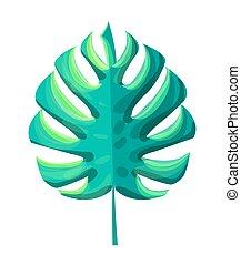 pianta, foglia, illustrazione, monstera, tropicale, vettore