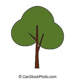 pianta, foresta albero, icona