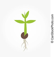 pianta, germinazione, piantina