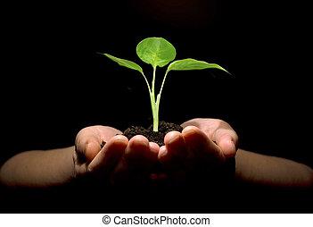 pianta, in, mani