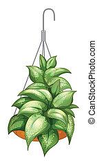 pianta in vaso, appendere