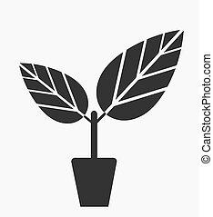 pianta, in, vaso
