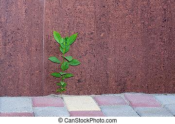pianta, marciapiede