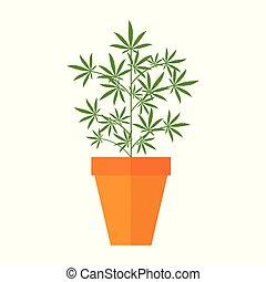 pianta marijuana, fioriera, marijuana