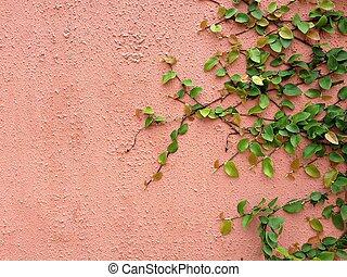 pianta, parete, sfondo verde, rampicante, rosso
