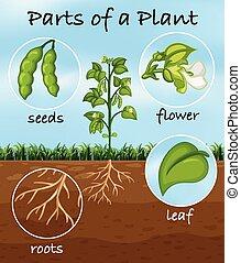 pianta, parti