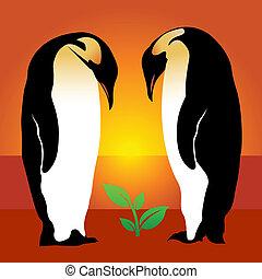 pianta, penguin.