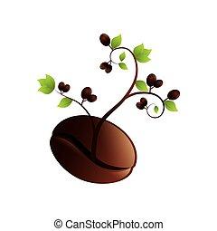 pianta, prodotto, organico, caffè