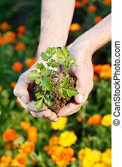pianta, prodotto petrochimico