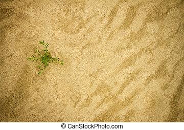 pianta, sabbia