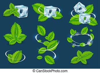 pianta, set, organico, vettore, fresco, menta, foglia