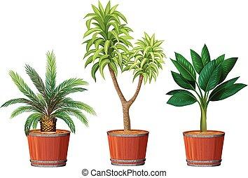 pianta, set, vaso