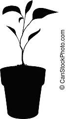 pianta, silhouette, germogliando, vaso, isolato, nero, bianco