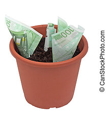 pianta soldi