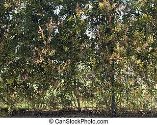 pianta, struttura