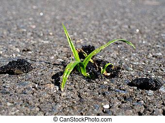 pianta, successo, affari, concept., verde, persistere, crescente, asfalto, road.