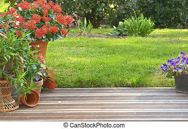 pianta succulenta, giardino, legno, fioritura, terrazzo, conservato vaso