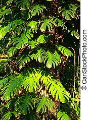 pianta tropicale