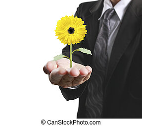 pianta, umano, presa a terra, mani