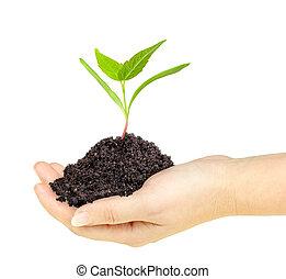 pianta verde, con, sporcizia, in, uno, mano