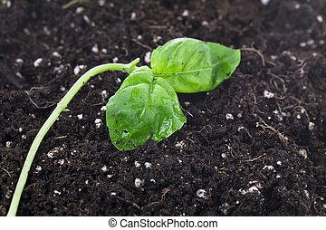 pianta verde, e, suolo