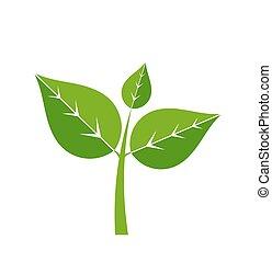 pianta, verde, icona