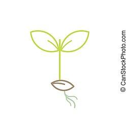 pianta, verde, piantina