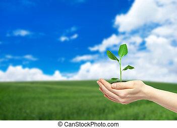 pianta, verde, presa a terra, mani
