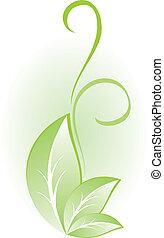 pianta, verde