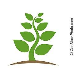 pianta, vettore, verde