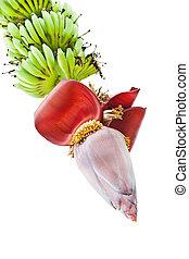 piantagione, agricoltura, fiore, banana, mazzo