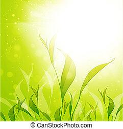 piantagione tè, foglie