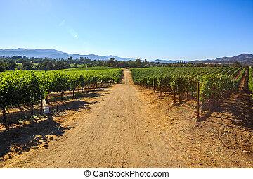 piantagione, valle, uva, napa
