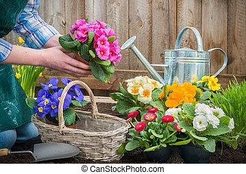 piantatura, fiori, giardiniere
