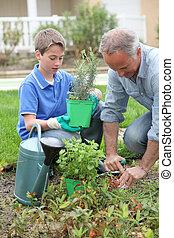 piantatura, giardino, casa, padre, figlio, fiori