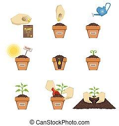 piantatura, seme, sequenza