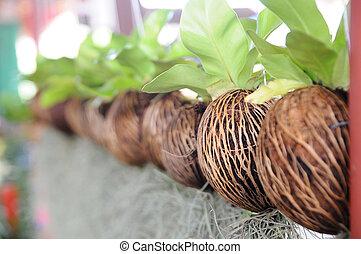 piantatura, suolo, senza, innovazione, sostenibile, ...