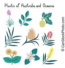 piante, australia, oceania