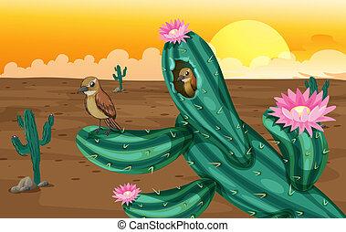 piante, cactus, uccelli, deserto