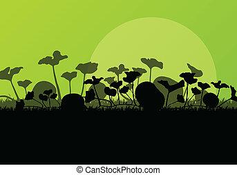 piante, campo, raccogliere, ricco, zucca